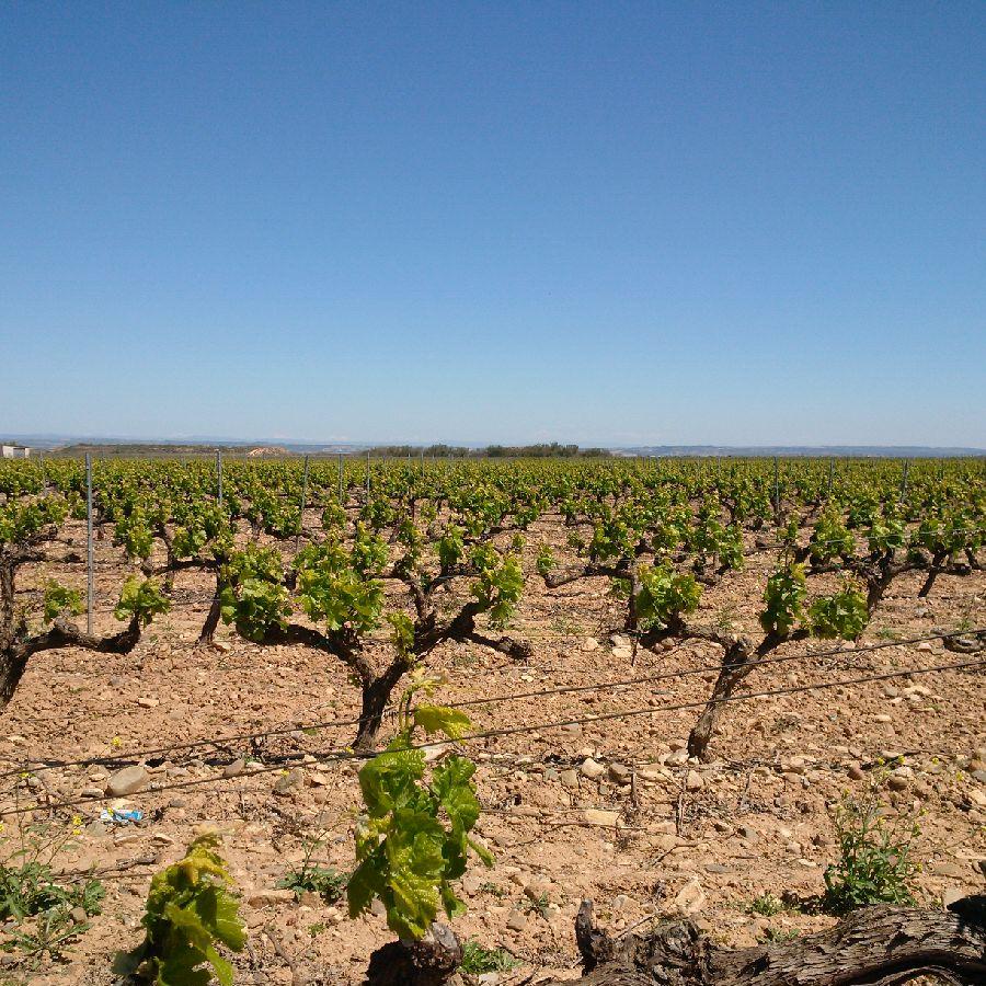 Rioja4
